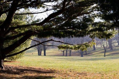 下落, 公園, 冷靜 的 免费素材图片