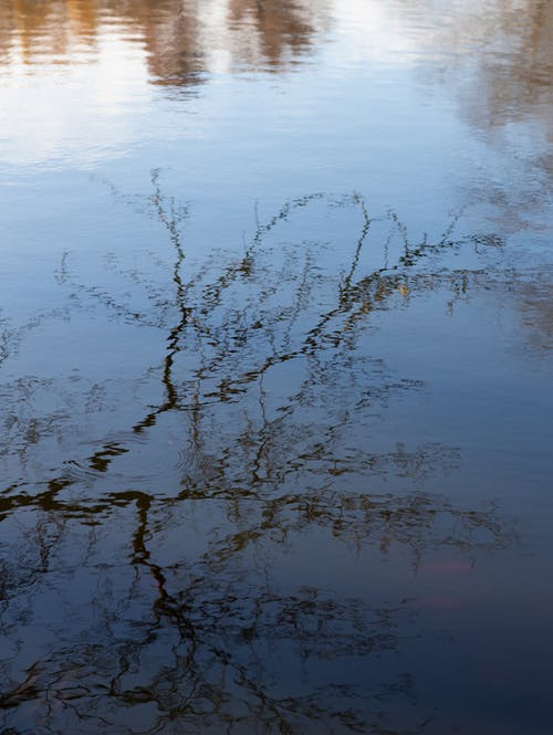 High angle of calm rippling surface of park pond with reflection of leafless tree in autumn