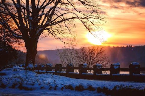 Gratis arkivbilde med bakbelysning, daggry, dagslys, forkjølelse