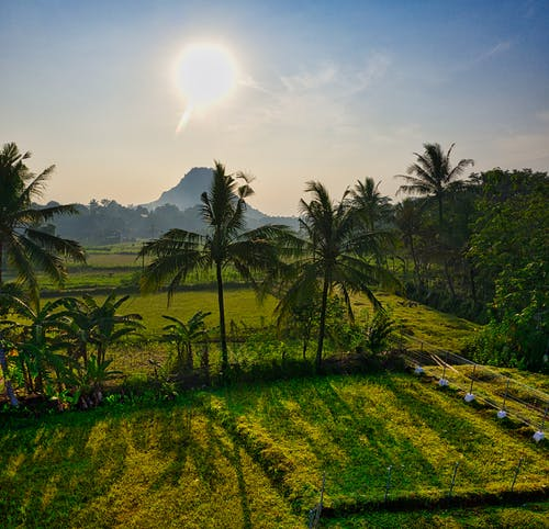 Tropical fields under sunset sky in mountainous countryside