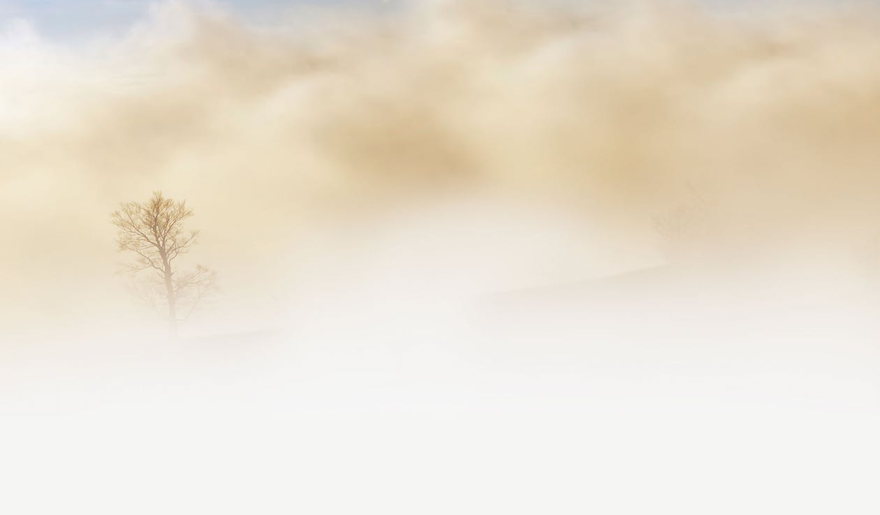 Bare Tree Duting Sand Storm