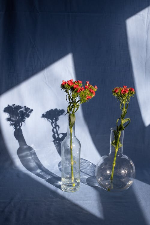 Bright blossoming flowers on thin stems with pleasant aroma in transparent vases on textile with shades in sunlight