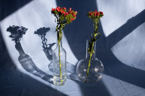 Bright blooming flowers on thin stalks with wavy leaves in glass vases on fabric with shades in sunlight