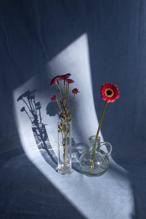 Bright gerbera near blooming flower in glass vase on fabric with shades in sunlight