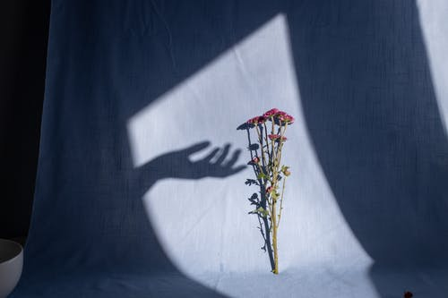 Blossoming flowers on thin stems with pleasant scent on fabric with shadow of gentle hand of anonymous person