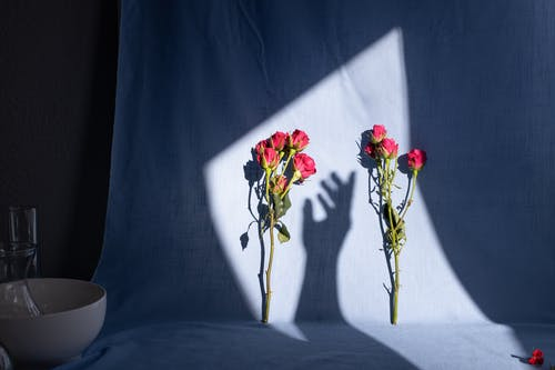 Blooming roses on fabric with shade of anonymous person hand