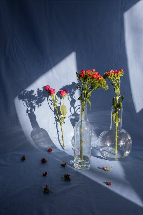 Composition of delicate red bush roses twigs in glass vases placed on blue textile in bright sunlight