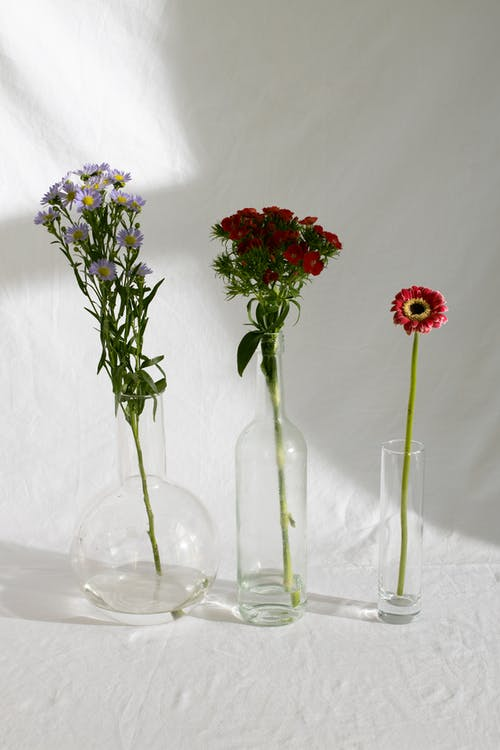 Arrangement of various garden flowers placed in glass vases on white tablecloth