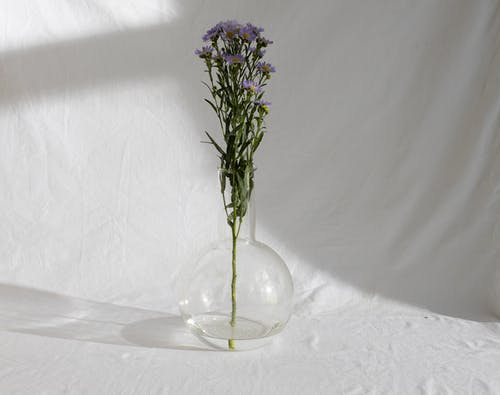 Stem of delicate elegant European Michaelmas daisy flowers with lilac petals placed in glass vase in sunlight