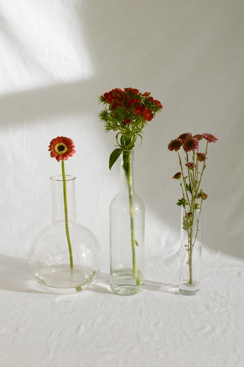 Bunches of carnation and florist s daisy garden plants with single gerbera flower placed in glass vases of different shapes against white background