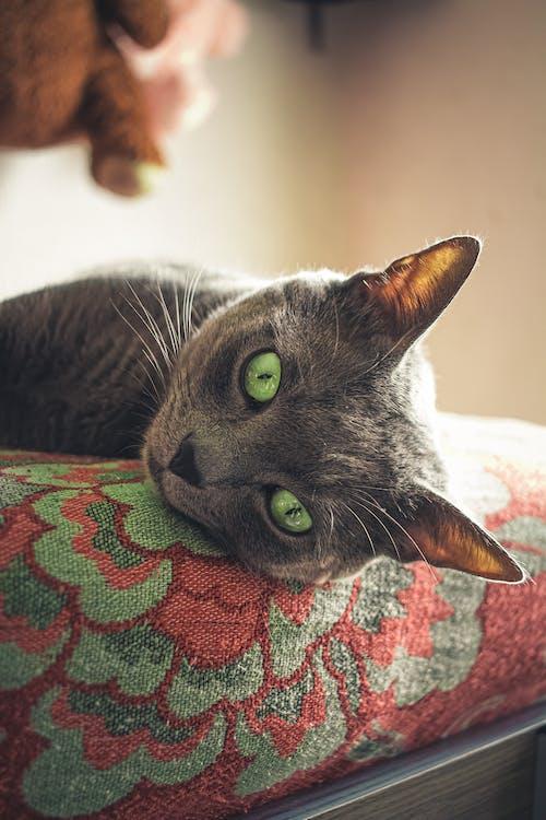 felino, Instagram, Pexels 圖庫 的 免费素材图片