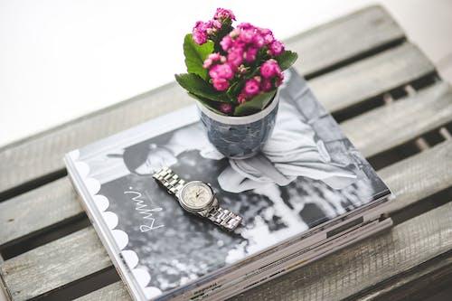 ahşap, Aşk, bitki örtüsü, çiçek içeren Ücretsiz stok fotoğraf