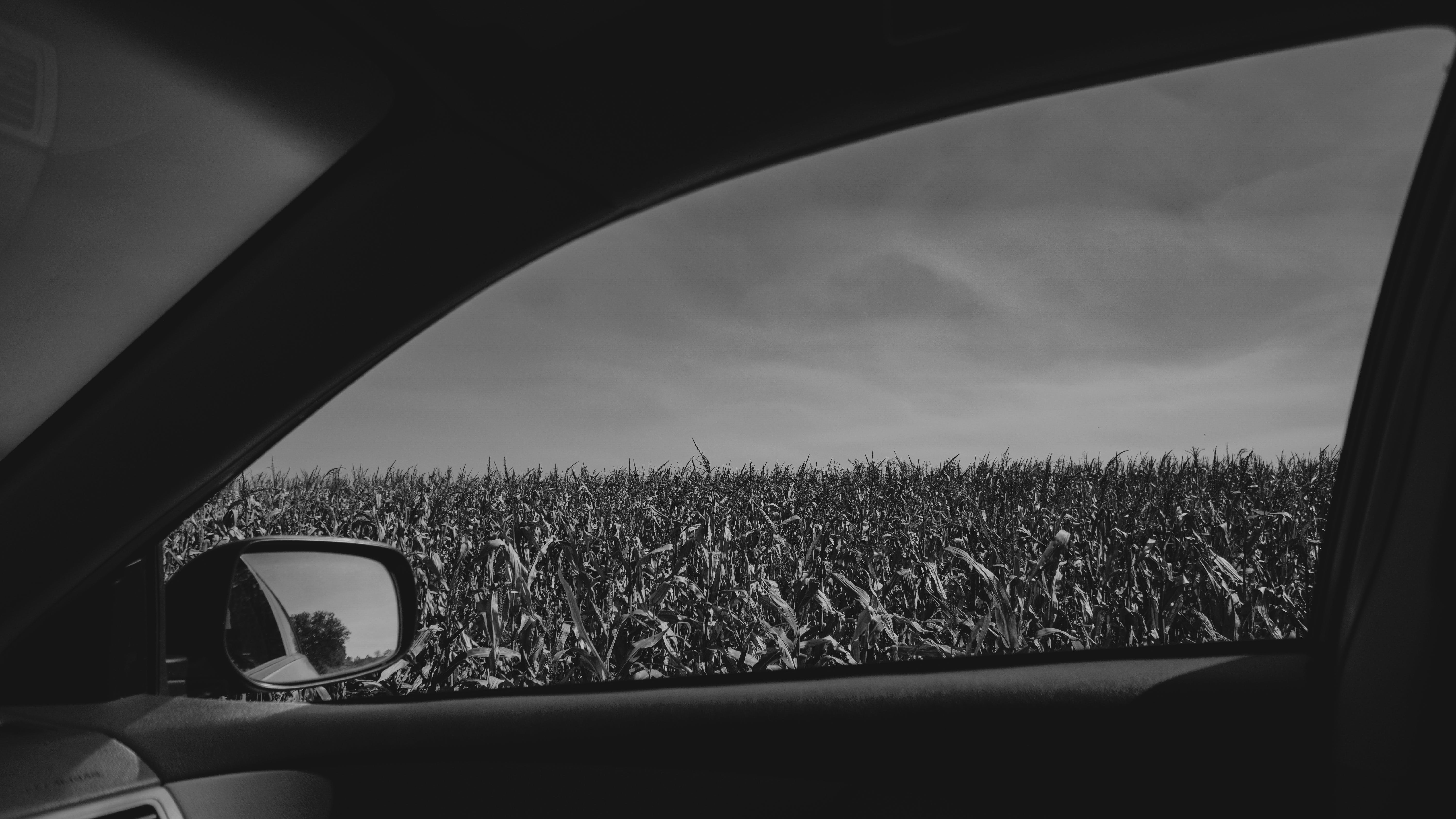 Grayscale Photography of Plant Field Seen Through Vehicle Window