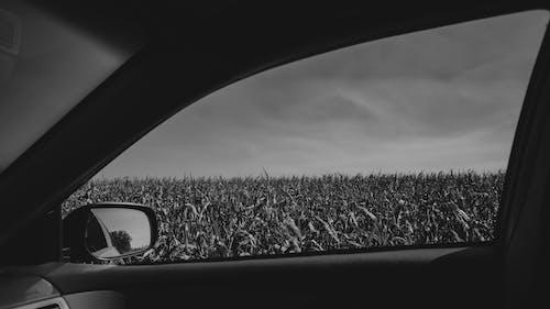 Darmowe zdjęcie z galerii z czarno-biały, lusterko boczne, monochromatyczny, pojazd