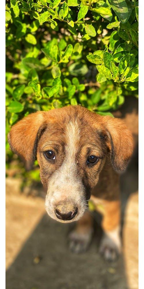 Free stock photo of baby dog, bright sun, dogs