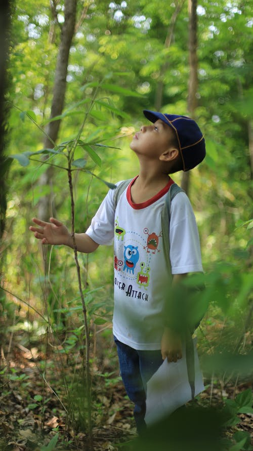 Attentive Asian boy in casual clothes with cap looking up among overgrown trees in forest