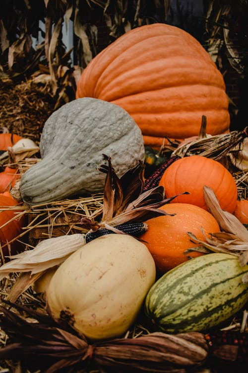 White and Orange Pumpkins on Brown Dried Leaves