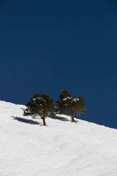 Coniferous trees in hoarfrost growing on mountain slope covered with snow against blue sky on sunny winter day in nature