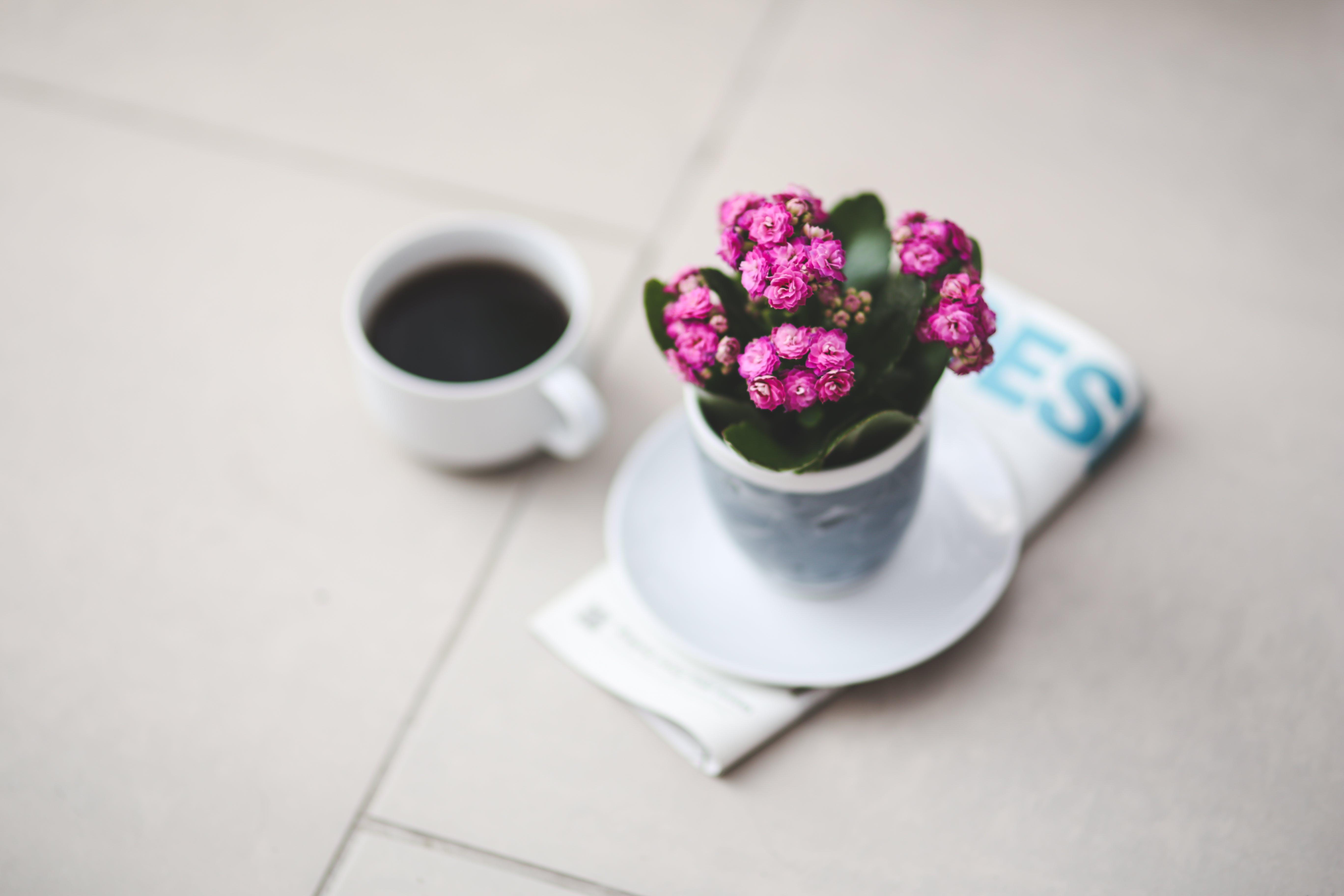 Foto profissional grátis de café, cor-de-rosa, flor, flores