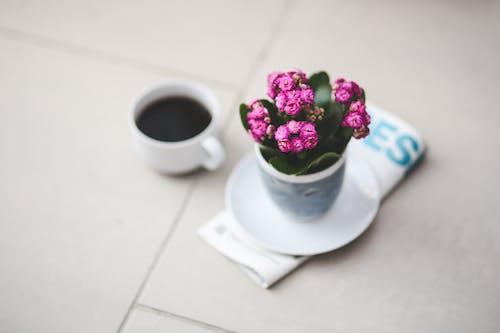 Kostenloses Stock Foto zu blume, blumen, kaffee, kalanchoe