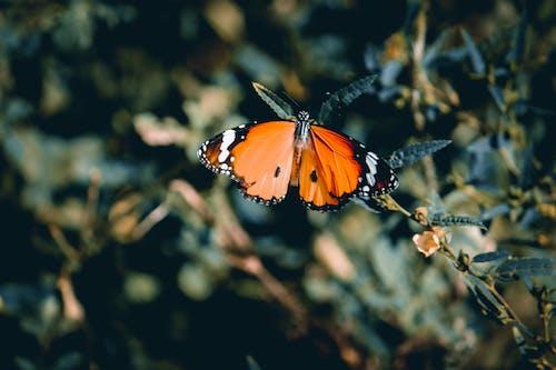 Δωρεάν στοκ φωτογραφιών με sri lankan φύση, αφαίρεση, αφαιρετικό