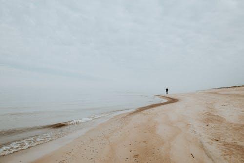 Gratis lagerfoto af alene, atmosfære, efterår, fjeder