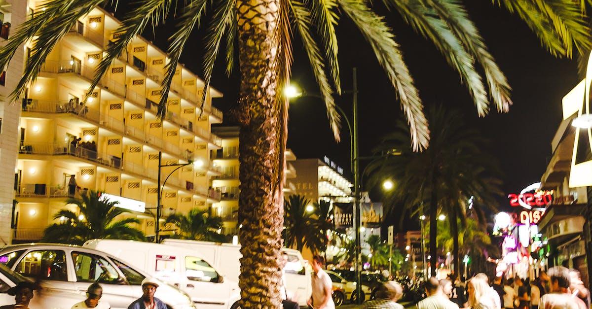 Free stock photo of blue, catalonia, coconut tree