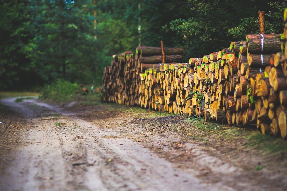 drewno, droga, drzewa