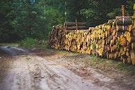 wood, road, landscape