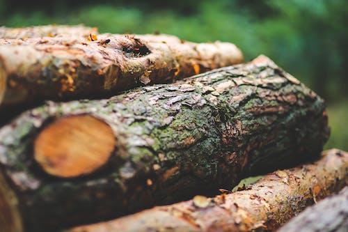 ağaç, ağaç gövdesi, ağaç kabuğu, ağaç kütüğü içeren Ücretsiz stok fotoğraf