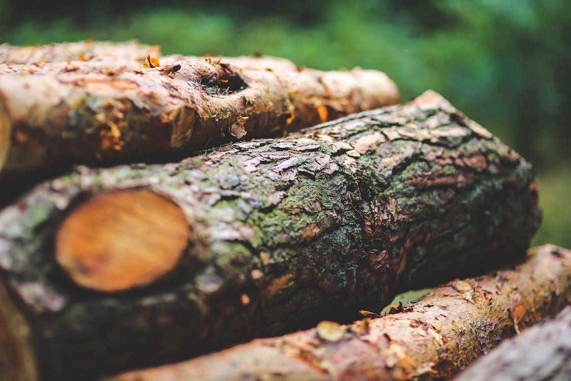 dřevěné uhlí, dřevo, flóra