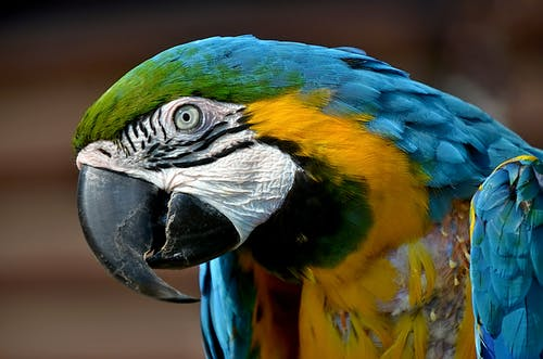 Blue Yellow Green and White Parrot