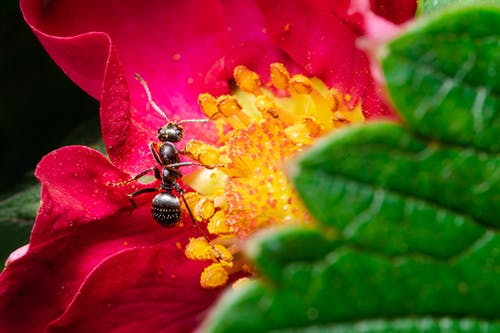 Free stock photo of ant, beautiful nature, beauty in nature