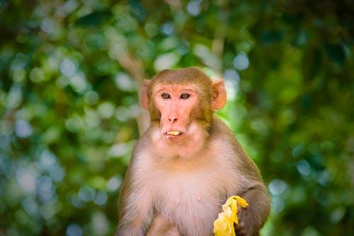 Close-Up Shot of a Macaque