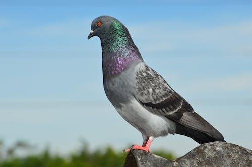 Close-Up Shot of a Pigeon
