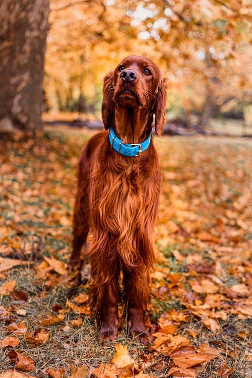 Brown Long Coat Medium Dog on Brown Dried Leaves