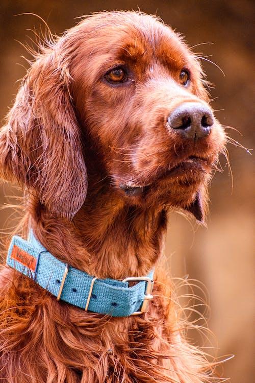 Brown Long Coated Dog in Tilt Shift Lens