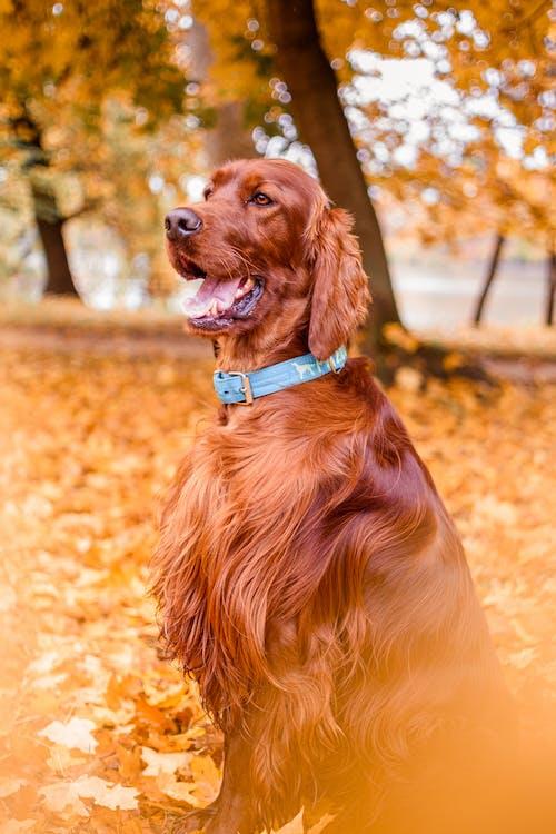 Brown Short Coat Dog on Brown Sand