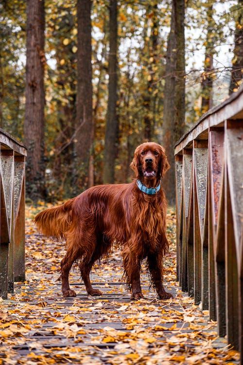 Brown Short Coat Medium Dog on Brown Wooden Fence