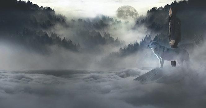 Free stock photo of fog, haze, wolf, travel