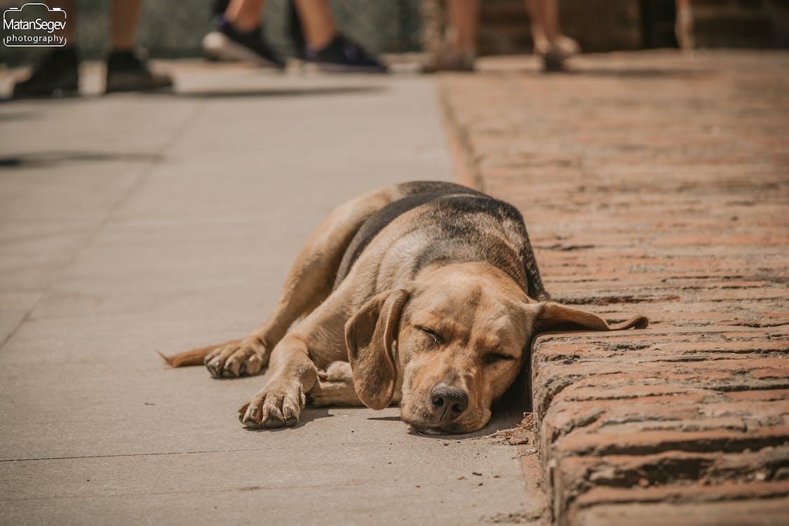 animal, dog, love