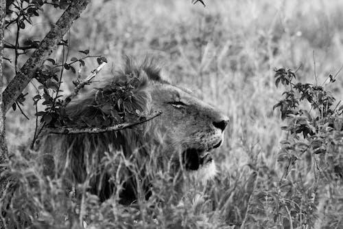 Foto d'estoc gratuïta de Àfrica, coratge, fort, jungla