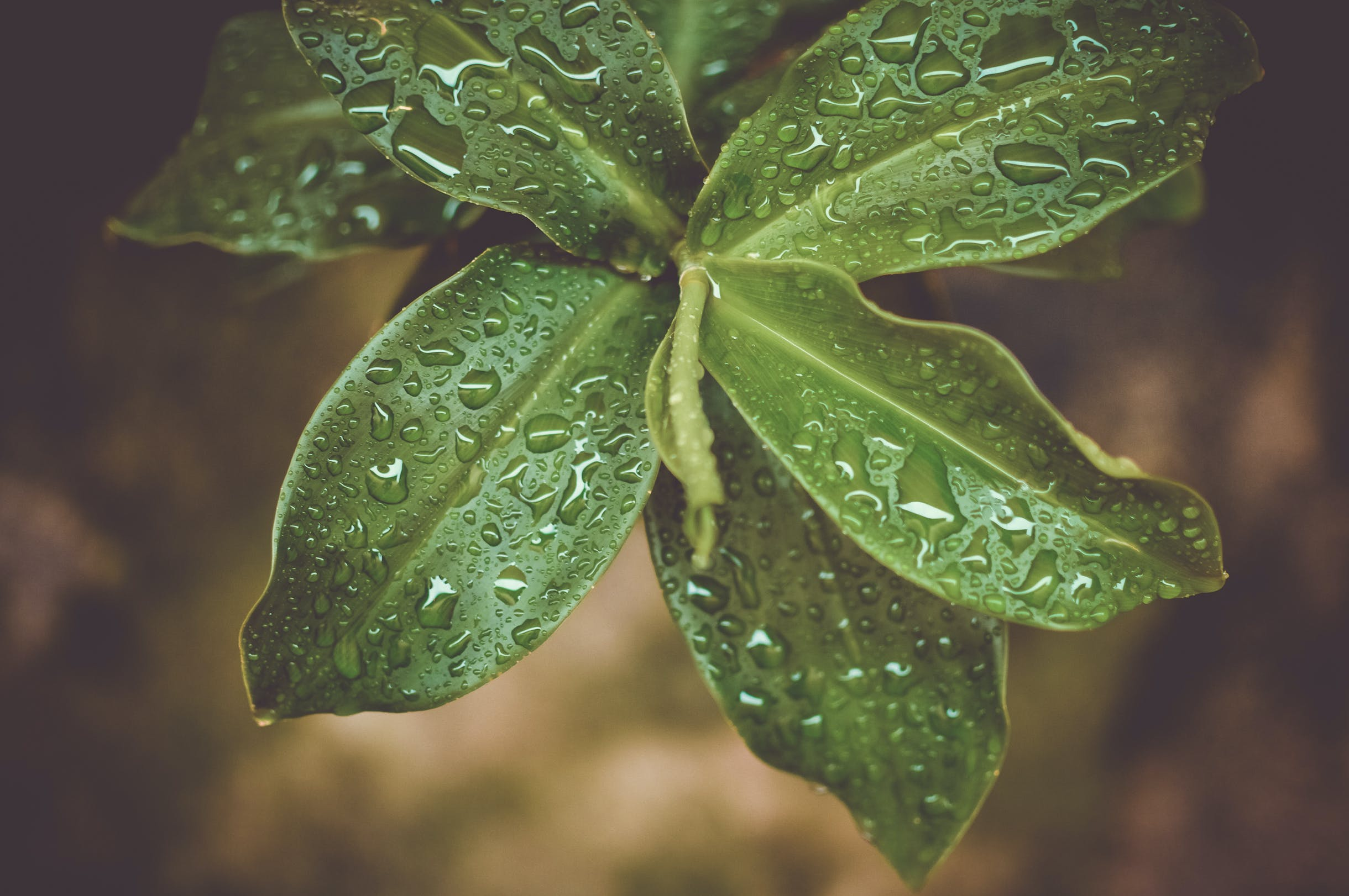 Microshot Photography on Green Plant