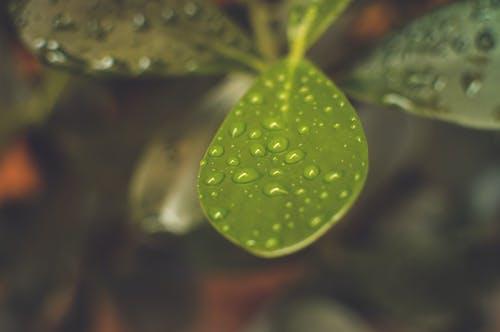 Δωρεάν στοκ φωτογραφιών με macro, βροχή, γκρο πλαν, διατροφή