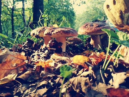 Foto d'estoc gratuïta de bolets, fongs, sol del bosc