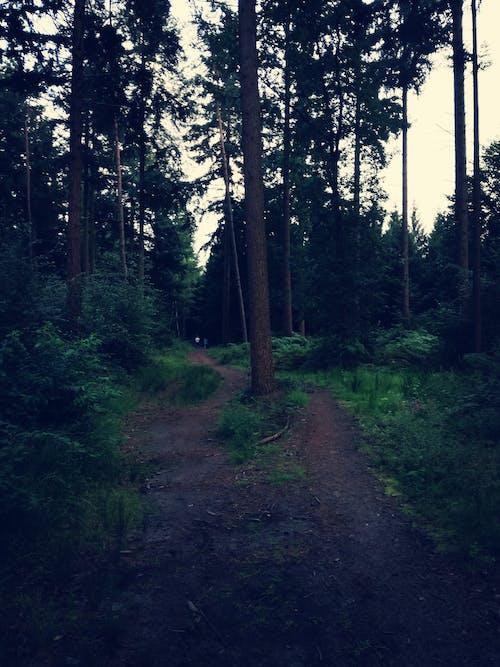Foto d'estoc gratuïta de blau fosc, bosc, camí forestal