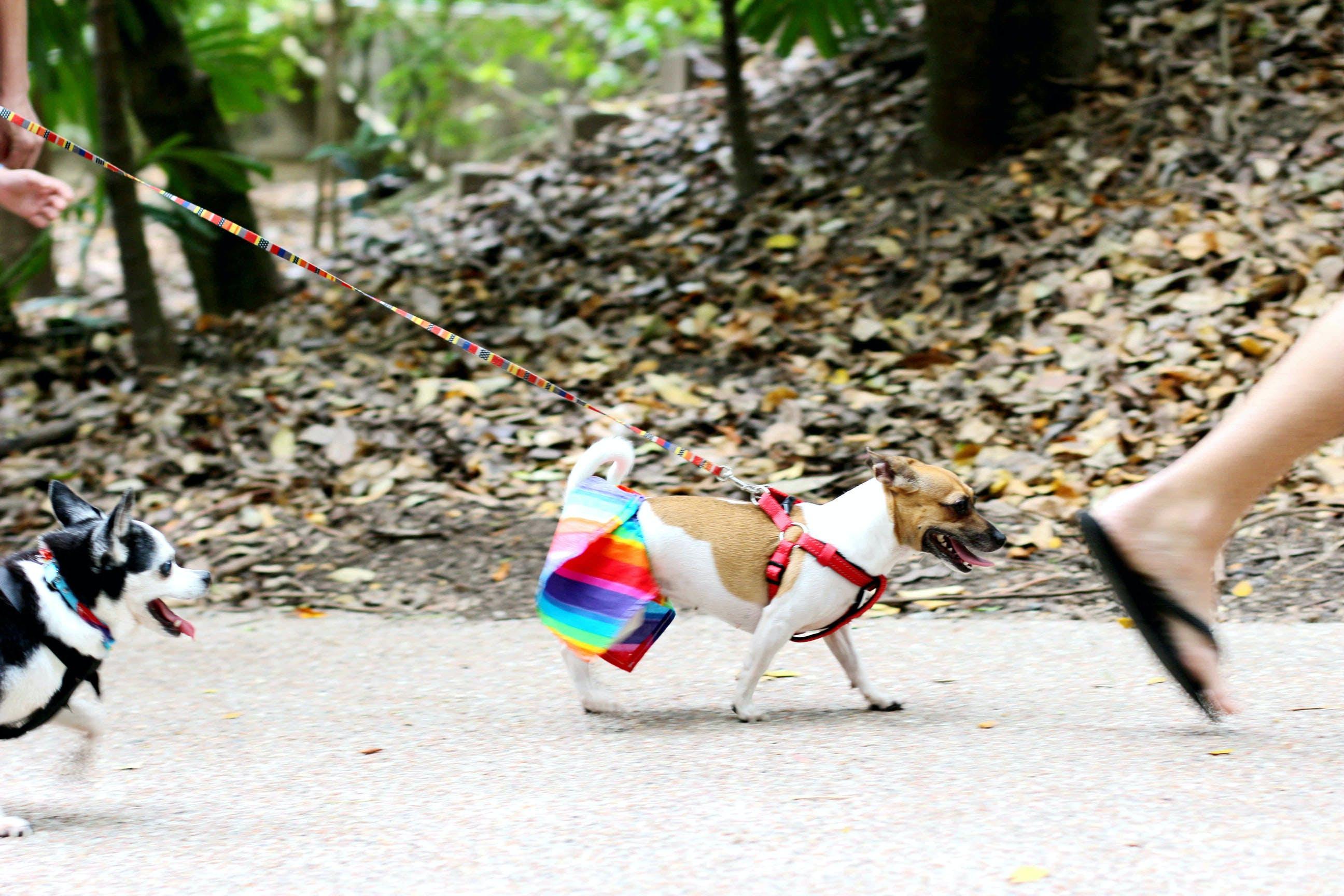 Free stock photo of diversity, dog, rainbow