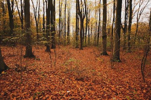 Free stock photo of autumn, autumn colors, fall