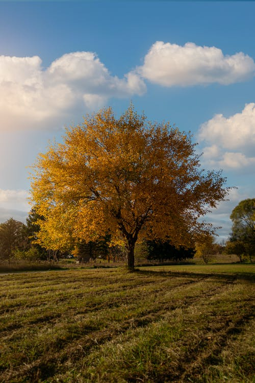 Brown Tree on Green Grass Field Under Blue Sky