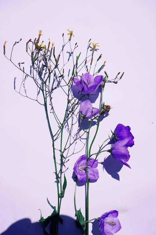 Purple Flower on Brown Tree Branch